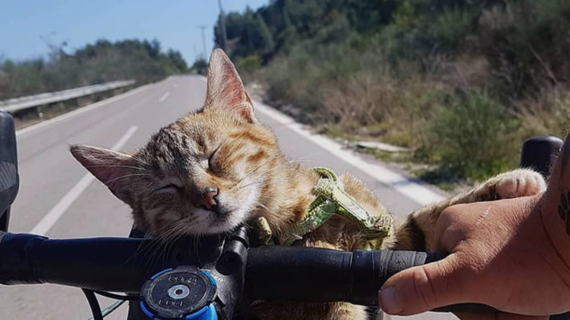 Yalnız Çıktığı Dünya Turuna Yolda Bulduğu Kediyle Devam Eden Gezginin Kalbinizi Isıtacak Hikayesi